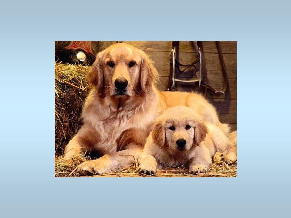 Des chiens Cest une chienne avec son chiot