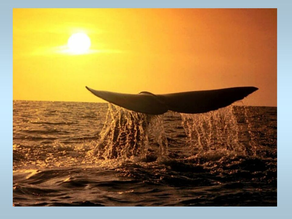 Une baleine Elle plonge