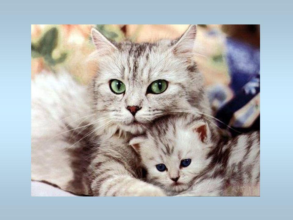 Des chats Un chatte avec ses chatons