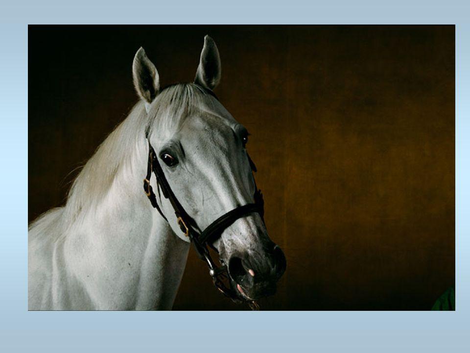 Un cheval Cest un cheval blanc