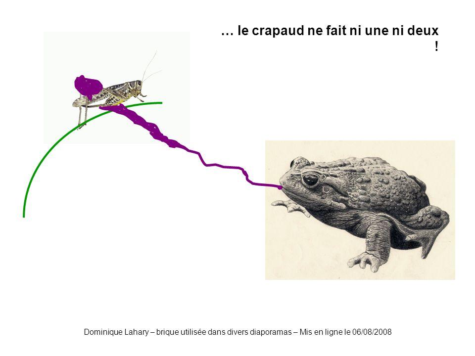 Dominique Lahary – brique utilisée dans divers diaporamas – Mis en ligne le 06/08/2008 Gloups !