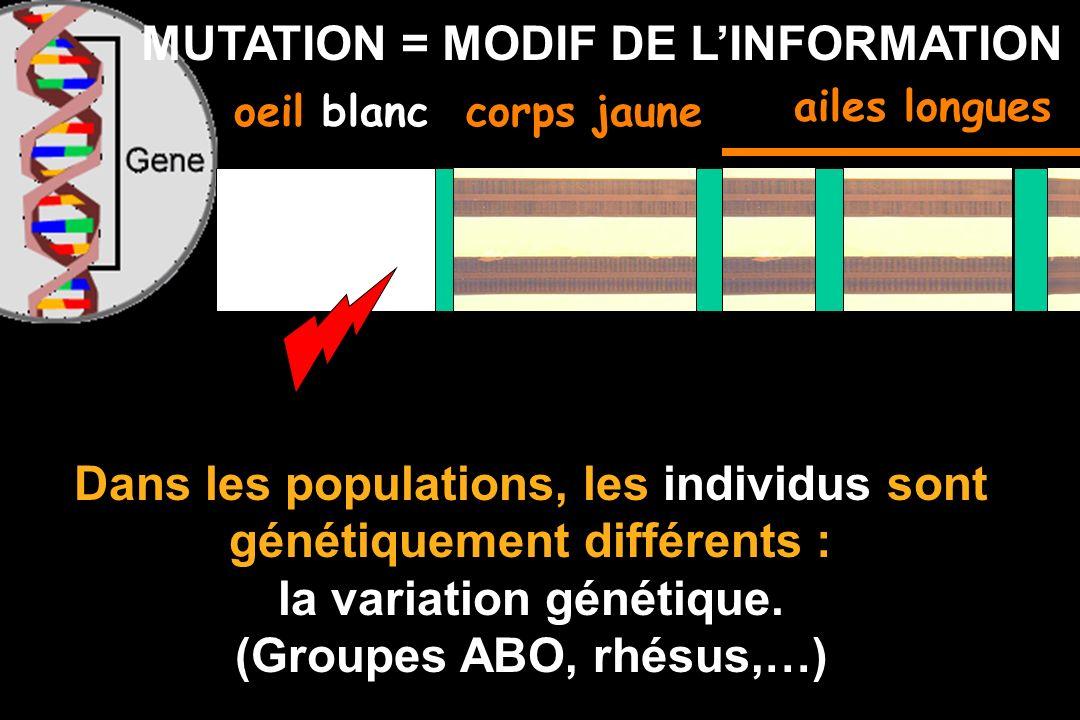 MUTATION = MODIF DE LINFORMATION oeil blanccorps jaune Dans les populations, les individus sont génétiquement différents : la variation génétique.
