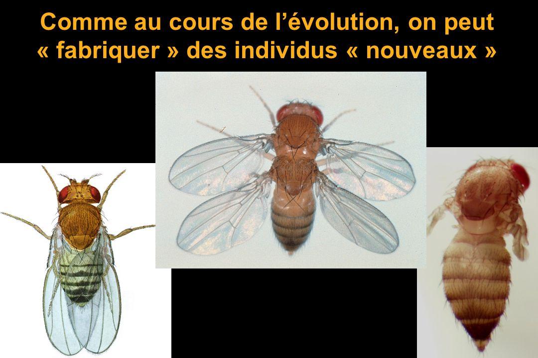 Comme au cours de lévolution, on peut « fabriquer » des individus « nouveaux »