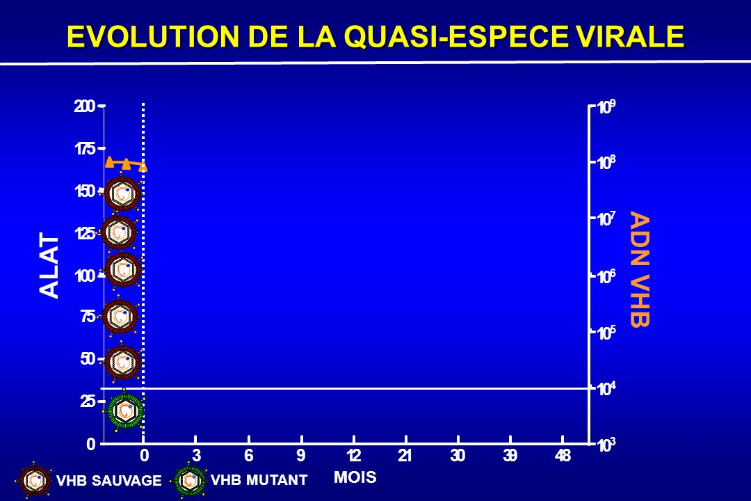 MOIS RESISTANCE GENOTYPIQUE 0 3691221303948 0 25 50 75 100 125 150 175 200 10 3 10 4 10 5 10 6 10 7 10 8 10 9 ALAT ADN VHB MUTATION(S) Analogue