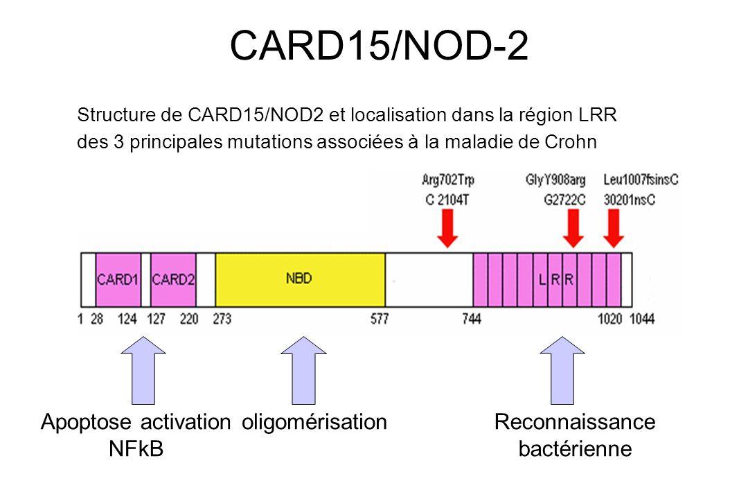 Chez les patients atteints de maladie de Crohn la fréquence cumulée de ces mutations est de 29% 17% des malades doublement mutés vs 0,3% population générale CARD15/NOD2 (2mutations) MC RR = 20 à 40 CARD15/NOD2 (1mutation) MC RR = 2 à 3 CARD15/NOD-2