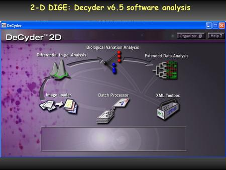 2-D DIGE: Decyder v6.5 software analysis