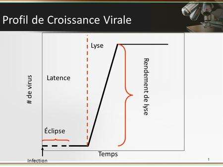 Profil de Croissance Virale 1 Éclipse Temps # de virus Infection Latence Lyse Rendement de lyse.