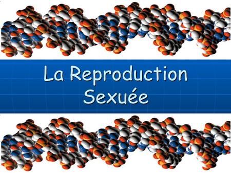 La Reproduction Sexuée. La Reproduction des Cellules Il y a deux types de reproduction: Il y a deux types de reproduction:
