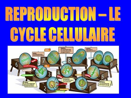 REPRODUCTION – LE CYCLE CELLULAIRE.