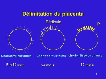Délimitation du placenta