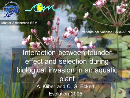 Interaction between founder effect and selection during biological invasion in an aquatic plant A. Kliber and C. G. Eckert Evolution 2005 Présenté par.