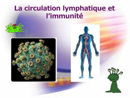 La circulation lymphatique et l'immunité