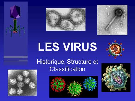 LES VIRUS Historique, Structure et Classification.