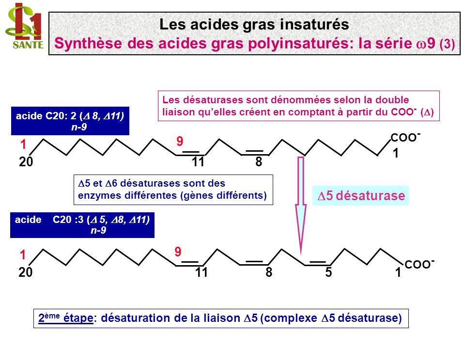 COO - 1 1120 1 9 8 5 COO - 1 1320 1 9 107 acide 7,10,13-docosatrienoïque, C22 :3 ( 7, 10, 13) n-9 élongase 3 ème étape: addition de deux carbones par une élongase acide C20 :3 ( 5, 8, 11) n-9 Malonyl~CoA + 2NADPH + H + Acétyl-CoA + ATP + HCO 3 - Les acides gras insaturés Synthèse des acides gras polyinsaturés: la série 9 (4)