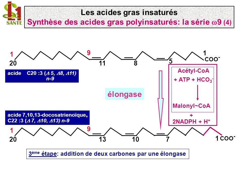 COO - 1 9 18 1 9 acide oléique C18 :1 (n-9) 9 COO - 1 918 1 9 6 acide C18 :2 ( 6, 9) COO - 1 1120 1 9 8 acide C20 :2 ( 8, 111) COO - 11120 1 9 85 COO - 1 1320 1 9 107 acide C20 :3 ( 5, 8, 11) acide 7,10,13-docosatrienoïque, C22 :3 ( 7, 10, 13) 6 désaturase 5 désaturase élongase Récapitulatif de la série n-9, 9 Les acides gras insaturés Synthèse des acides gras polyinsaturés: la série 9 (5)