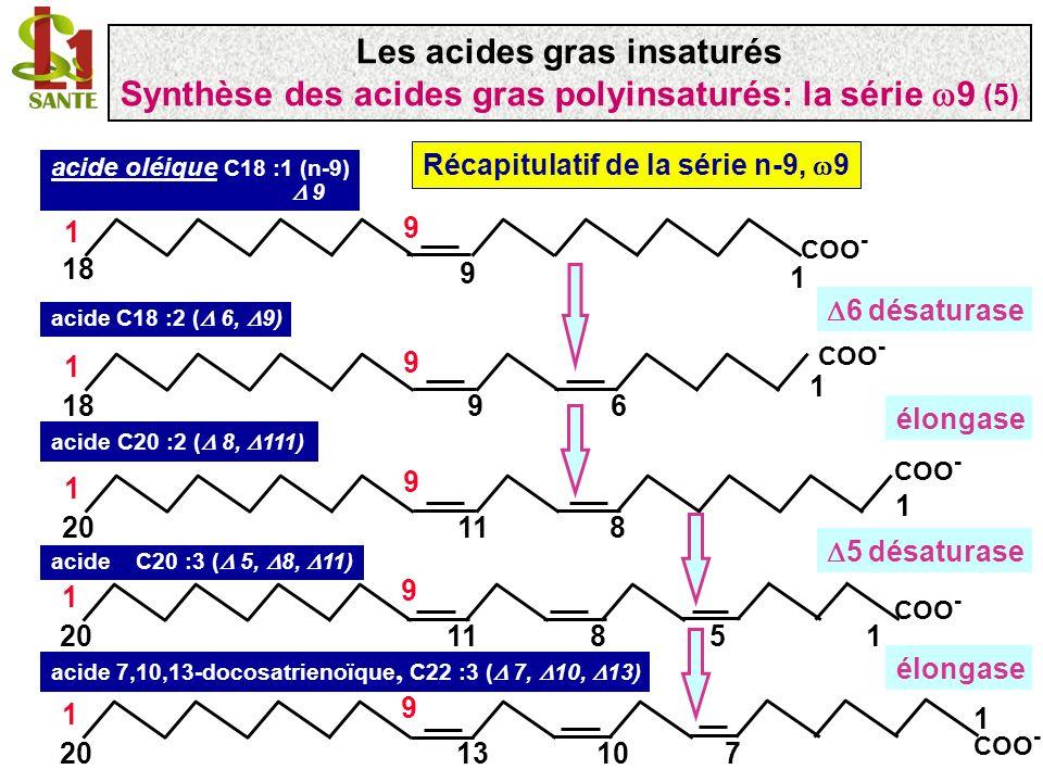 Les séries indispensables n-6 ( 6) et n-3 ( 3) 1- Les mammifères ne peuvent synthétiser de novo ces acides gras car ils nont pas les désaturases capable de créer des doubles liaisons entre n et n-9 3- Les végétaux et certains animaux peuvent synthétiser des acides gras avec des doubles liaisons entre n et n-9, les acides gras n-6 et n-3 2- Ces acides gras (surtout certains membre de ces séries) sont indispensables à la vie des mammifères (vitamines F pour certains auteurs) 4- Les mammifères doivent se procurer les précurseurs des acides gras 6 (n-6) et 3 (n-3) en mangeant des végétaux et certains organismes animaux Les acides gras insaturés Définition des séries 6 et 3