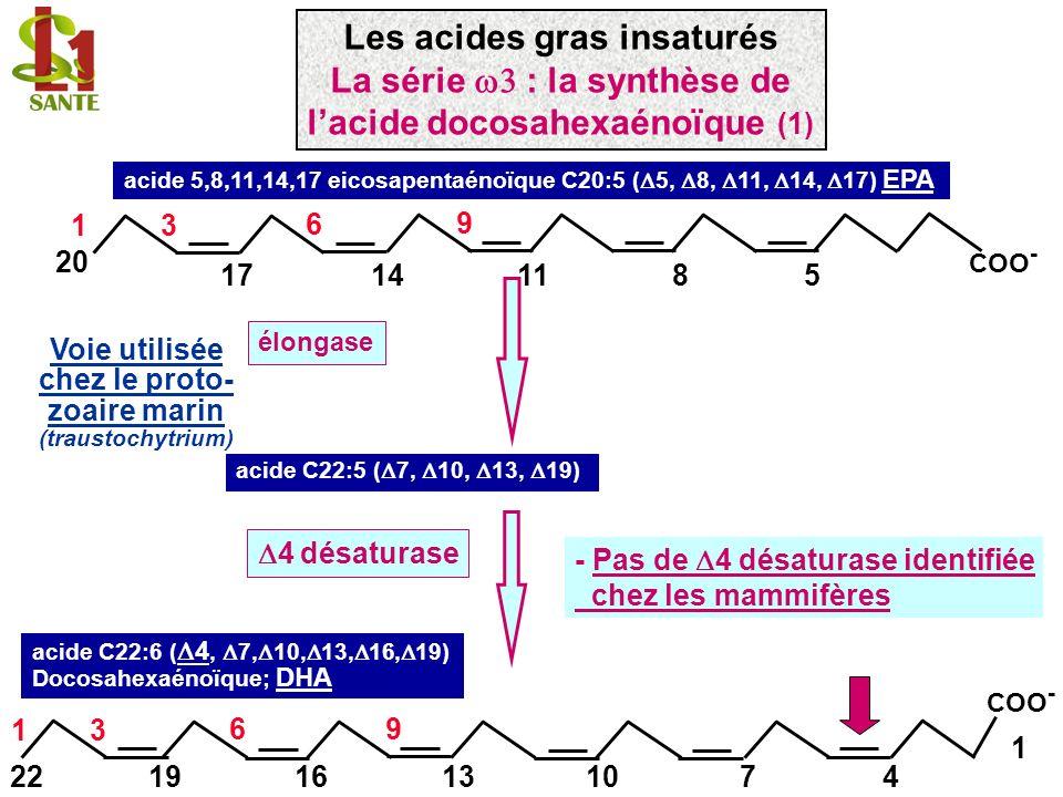 Voie chez les mammifères: - 2 étapes délongation - -oxydation (-2 carbones) acide 5,8,11,14,17 eicosapentaénoïque C20:5 ( 5, 8, 11, 14, 17) EPA 11148 96 5 13 20 17 COO - Élongase +2 acide C24:5 ( 9, 12, 15, 18, 21) 6 désaturase acide C24:6 ( 6, 9, 12, 15, 18, 21) acide C22:6 ( 4, 7, 10, 13, 16, 19) Docosahexaénoïque; DHA oxydation = perte 2 carbones (peroxisome et non mitochondrie) COO - 1 22 96 1316107 13 194 Les acides gras insaturés La série : la synthèse de lacide docosahexaénoïque (2)