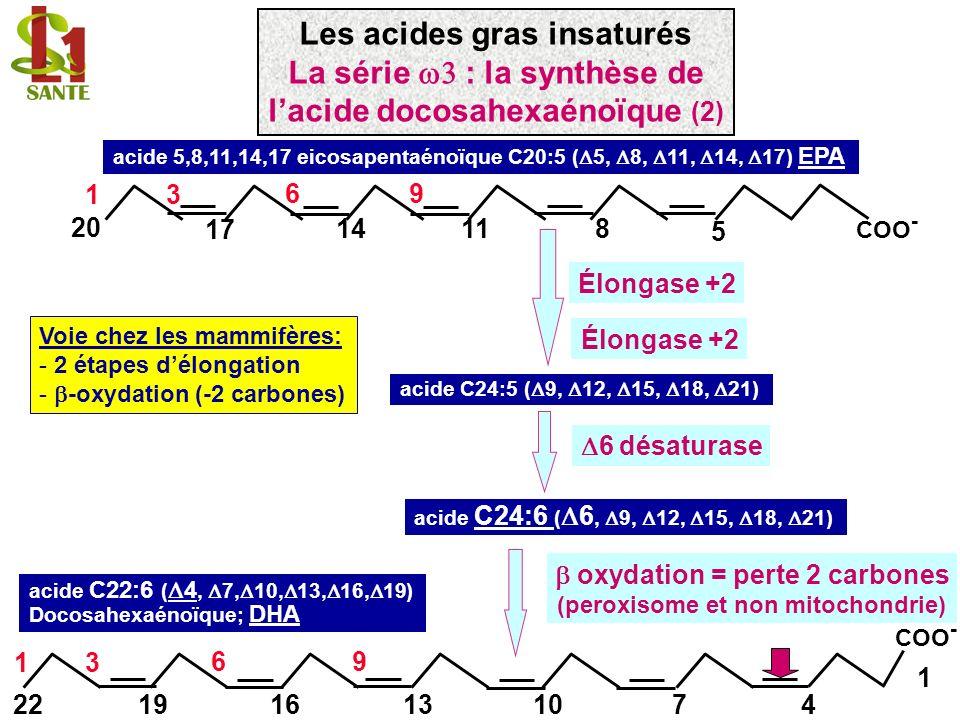 1 9 18 COO - 1 9 acide oléique C18 :1 (n-9), 9 acide linoléique C18 :2 (n-6) ( 9, 12) 19 COO - 18 1 96 12 Indispensable, quelques g/jour acide -linolénique C18 :3 (n-3) ( 9, 12, 15) 19 COO - 18 196 12 3 15 Pas d interconversion possible chez l homme Car absence de 12 et 15 désaturase Les acides gras insaturés Les premiers acides gras des séries ω -3, ω -6, ω -9