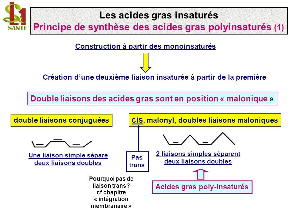 Importance de la place de la première double liaison Définition de trois « séries » dacides gras Les doubles liaisons sont créées à droite (vers COO - ) de la première double liaison 1 3 5 8 6 Série n-6 ou 6 Les cellules animales « supérieures » nont pas de désaturase agissant entre n et n-9 1 3 5 7 9 Série n-9 ou 9 6 1 3 4 6 8 Série n-3 ou 3 5 7 9 7 9 Les acides gras insaturés Principe de synthèse des acides gras polyinsaturés (2)