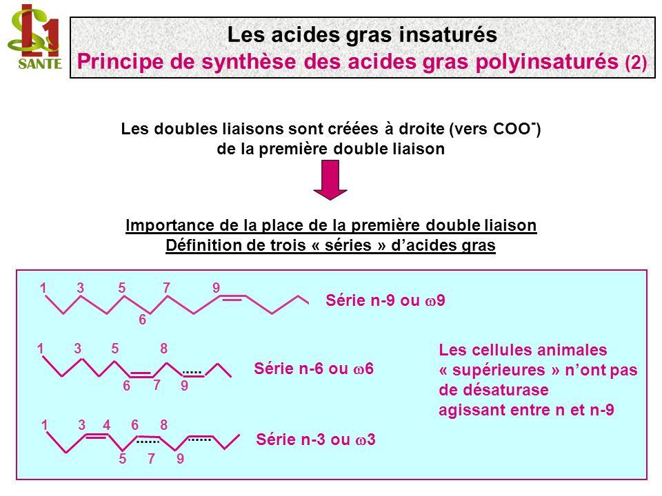 COO - 1 9 18 1 9 acide oléique C18 :1 ( 9) 9 COO - 1 918 1 9 6 acide C18 :2 ( 6, 9) doubles liaisons maloniques 1 ère étape: désaturation de la liaison 6 (complexe 6 désaturase) 6 désaturase Les désaturases sont dénommées selon la double liaison quelles créent en comptant à partir du COO - ( ) Les acides gras insaturés Synthèse des acides gras polyinsaturés: la série 9 (1) Série 9 ou n-9