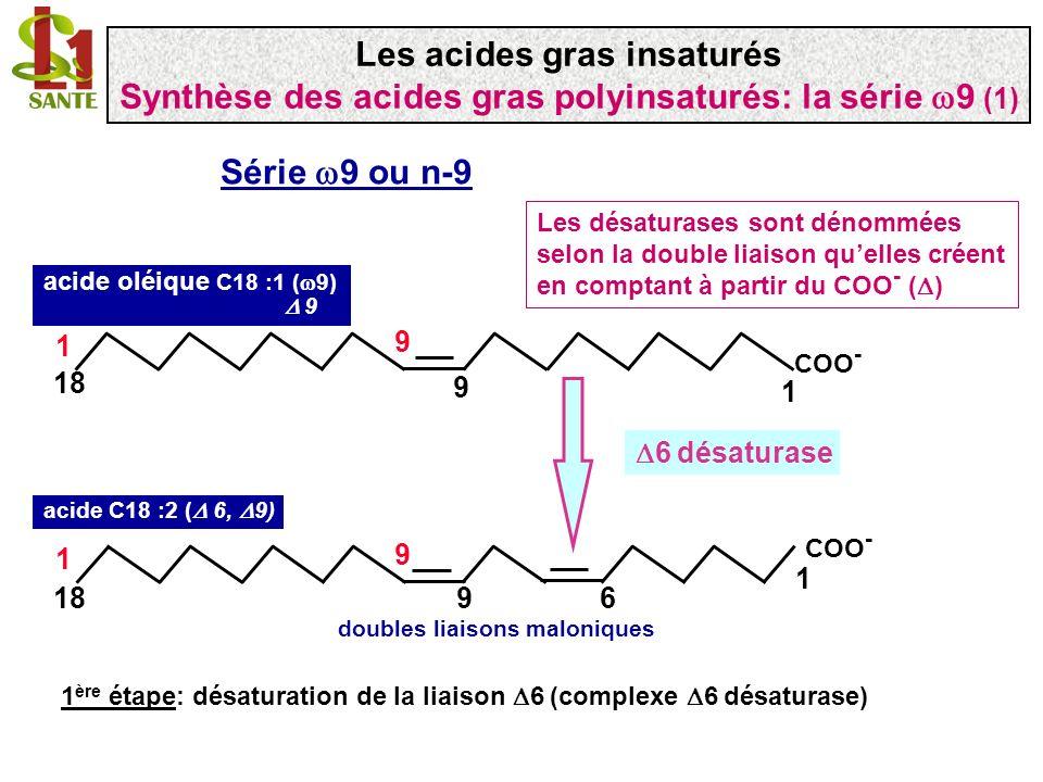 COO - 1 918 1 9 6 acide C18: 2 ( 6, 9) n-9 doubles liaisons maloniques COO - 1 1120 1 9 8 acide C20: 2 ( 8, 11) n-9 élongase 2 ème étape: addition de deux carbones par une élongase utilisation dacétyl à partir de malonyl-CoA dans réticulum sarcoplasmique (enzyme microsomiale) Réaction similaire à la 1 ère étape catalysée par la FAS Malonyl~CoA + 2NADPH + H + Acétyl-CoA + ATP + HCO 3 - Les acides gras insaturés Synthèse des acides gras polyinsaturés: la série 9 (2)