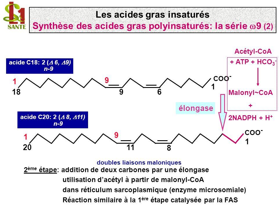 COO - 1 1120 1 9 8 COO - 11120 1 9 85 acide C20 :3 ( 5, 8, 11) n-9 acide C20: 2 ( 8, 11) n-9 2 ème étape: désaturation de la liaison 5 (complexe 5 désaturase) 5 désaturase Les désaturases sont dénommées selon la double liaison quelles créent en comptant à partir du COO - ( ) 5 et 6 désaturases sont des enzymes différentes (gènes différents) Les acides gras insaturés Synthèse des acides gras polyinsaturés: la série 9 (3)