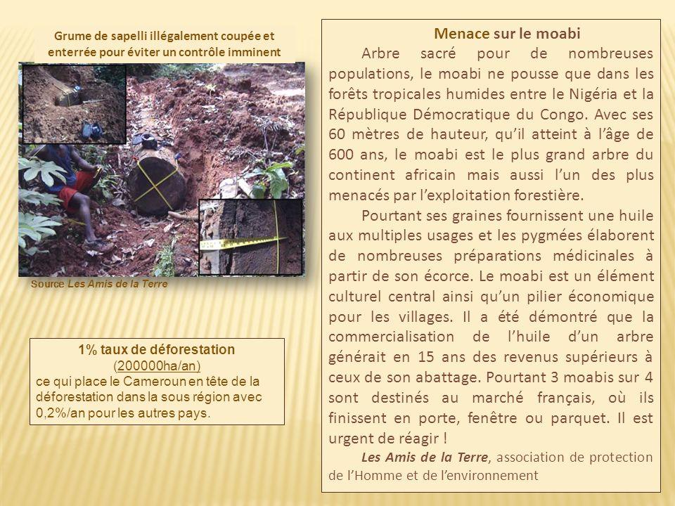 L exploitation de la forêt camerounaise nest pas économiquement viable : la déforestation massive est une atteinte irréversible au capital forestier.