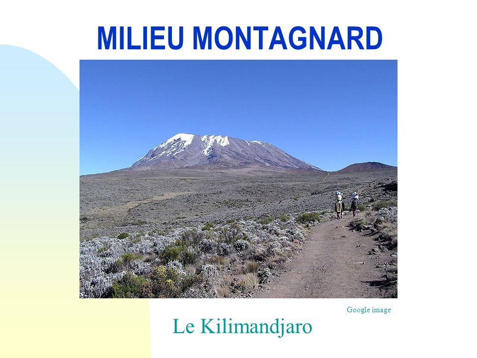 Le Zèbre des montagnes Le Zèbre des montagnes vit sur les escarpements accidentés et montagneux,en savanes semi- arides,avec beaucoup de points d eau,en Afrique du sud à 2000m d altitude.