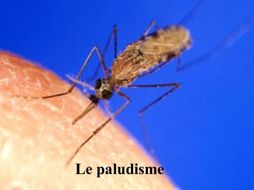 Service de Lutte Anti-Vectorielle DRASS de La Réunion Le paludisme Maladie parasitaire transmise par un moustique Anophèle parasite : Plasmodium 4 types de plasmodium : ovale, malariae, vivax et falciparum un seul mortel : falciparum 2 500 000 morts par an (OMS) 1 enfant meurt du paludisme toutes les 30 secondes dans le monde