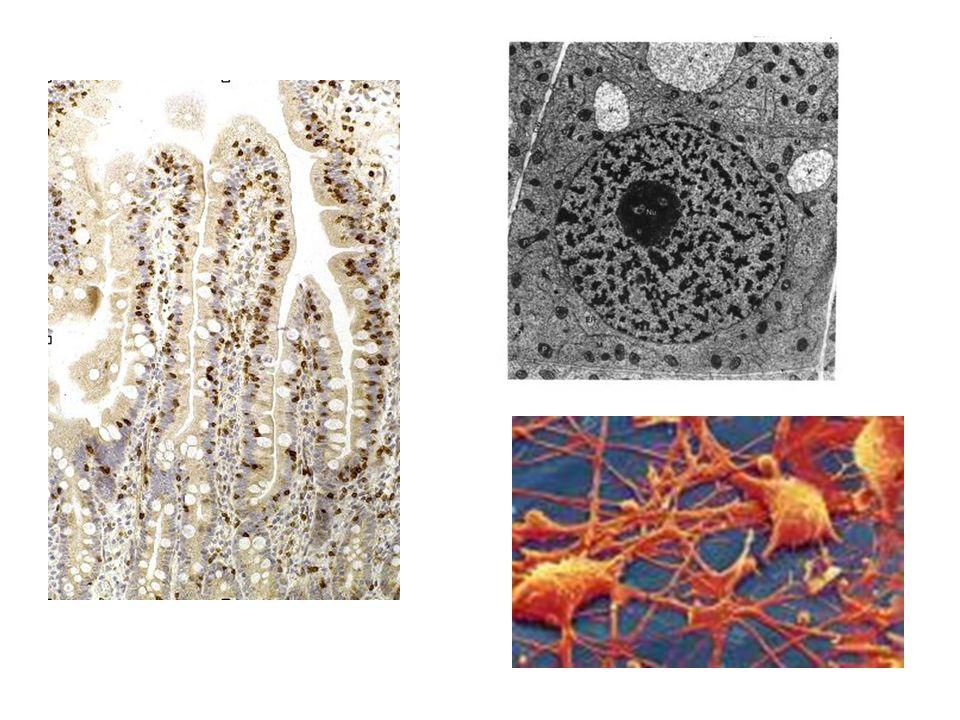 B.Quel est le lien entre le fonctionnement de lorganisme et lexistence de cellules au sein de notre organisme .