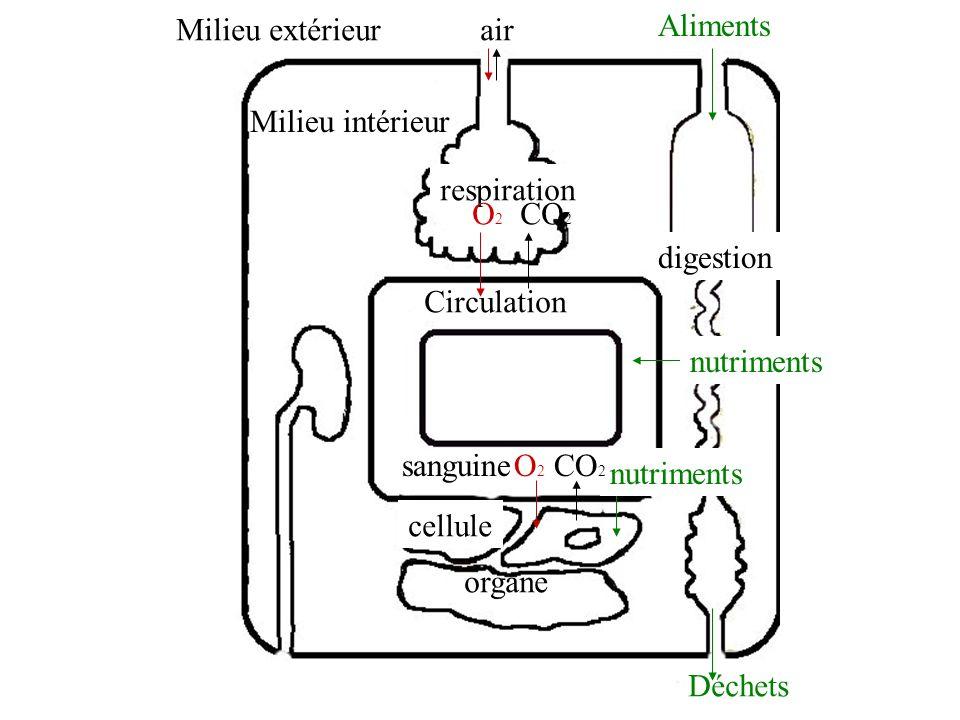 B.Comparons les besoins des cellules en fonction de leur activité.