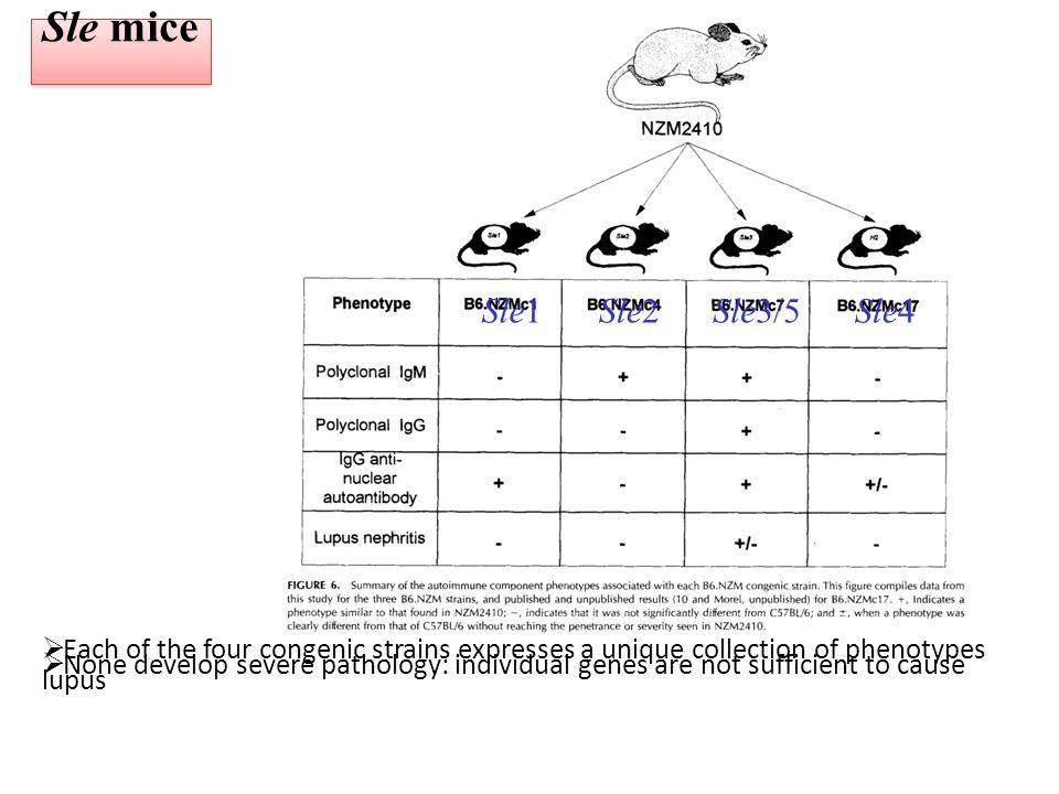 Modèles animaux de MAI 2011 Illustration de la multigénicité des maladies autoimmunes autres systèmes d abord : -création de souris KO pour différents gènes avec obtention d un même phénotype -croisement de souris KO pour obtenir un phénotype lupique -utilisation d un KO sur un fond génétique particulier, ne donnant pas le même résultat que sur un autre fond (B6, Balbc, 129, DBA2...)