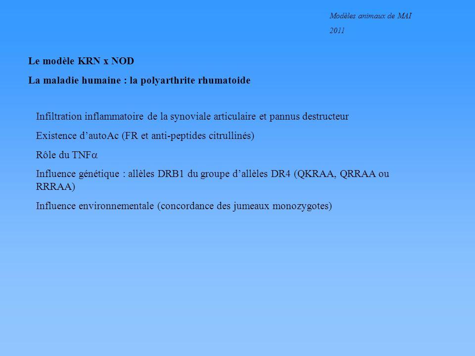 Modèles animaux de MAI 2011 Le modèle KRN x NOD Validation dun modèle de PR KRN : modèle trangénique pour un TCR F1, KRN x NOD : descendance du croisement souris KRN et NOD Polyarthrite érosive à 5 semaines Infiltration de la synoviale articulaire Existence dautoanticorps Influence génétique (molécules de classe II de NOD)