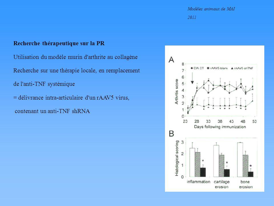 Modèles animaux de MAI 2011 Coopération des shémas de limmunité innée et spécifique Rôle potentiel des TLRs dans lautoimmunité Récepteurs Toll ou Toll-R : récepteurs présents à la surface ou dans les endosomes de différents types cellulaires (lymphocytes T ou B, cellules dendritiques) Susceptibles dêtre directement activés par des composants bactériens TLR-4 : LPS TLR-9 : CpG bactériens TLR-2 : protéines OspA de Borrélia TLR-5 : flagelline bactérienne TLR-7 : RNA viral avec activation de la cellule en aval