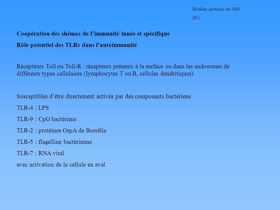Modèles animaux de MAI 2011 Coopération des shémas de limmunité innée et spécifique Rôle potentiel des TLRs dans lautoimmunité
