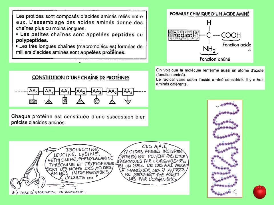 Acides aminés*(aa) : Unité de base des protides (monomère).