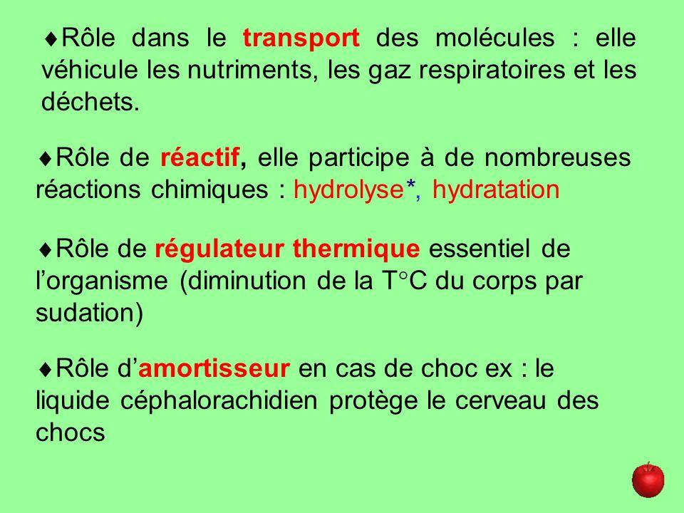- De quoi dépendent les besoins hydriques de lHomme (2 choses).