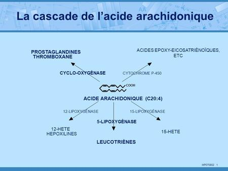 MP COOH ACIDE ARACHIDONIQUE (C20:4) LEUCOTRIÈNES PROSTAGLANDINES THROMBOXANE ACIDES EPOXY-EICOSATRIÈNOÏQUES, ETC 15-HETE 12-HETE HEPOXILINES CYCLO-OXYGÉNASE.