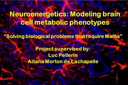Neuroenergetics: Modeling brain cell metabolic phenotypes Solving biological problems that require Maths Project supervised by: Luc Pellerin Aitana Morton.
