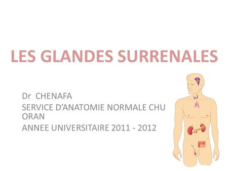 LES GLANDES SURRENALES