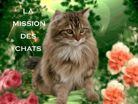 LA MISSION DES CHATS 1.
