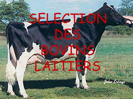 SELECTION DES BOVINS LAITIERS