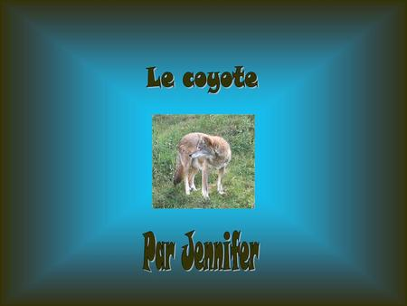 Le coyote Par Jennifer.