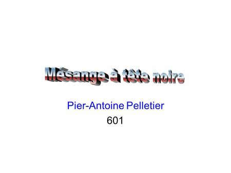 Pier-Antoine Pelletier 601 Introduction Aspect physique Nourriture Habitat Reproduction Vol Conclusion Résumé Bibliographie.