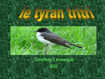 Geoffrey Levesque 602. 1-Introduction 2-Habitation 3-Alimentation 4-Reproduction 5-Aspect physique 6-Vol 8-Conclusion 9-Résumé 10-Bibliographie.