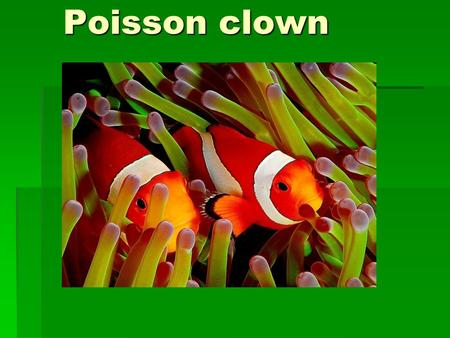 Poisson clown.
