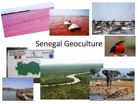 Senegal Geoculture. Baobab tree= emblem of Senegal, flag= green, yellow, red National park Niokolo Koba= 2 million acres, protects lions, elephants antelope,