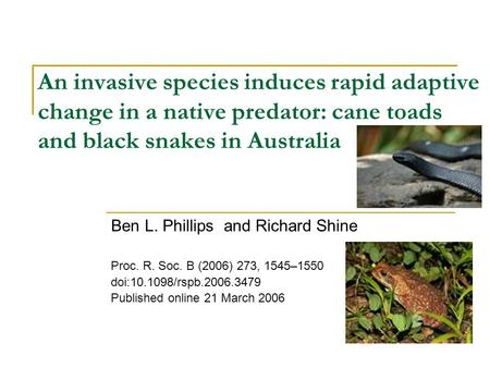 An invasive species induces rapid adaptive change in a native predator: cane toads and black snakes in Australia Ben L. Phillips and Richard Shine Proc.