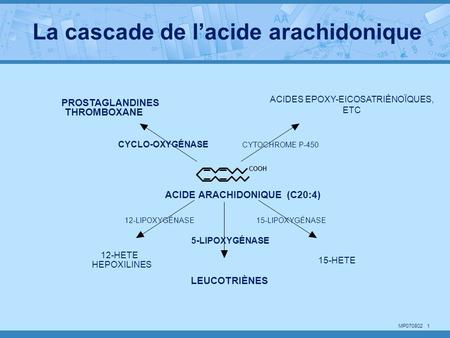 MP070802 1 COOH ACIDE ARACHIDONIQUE (C20:4) LEUCOTRIÈNES PROSTAGLANDINES THROMBOXANE ACIDES EPOXY-EICOSATRIÈNOÏQUES, ETC 15-HETE 12-HETE HEPOXILINES CYCLO-OXYGÉNASE.