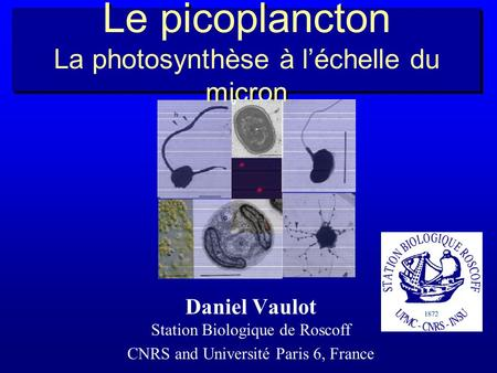 Le picoplancton La photosynthèse à léchelle du micron Daniel Vaulot Station Biologique de Roscoff CNRS and Université Paris 6, France.
